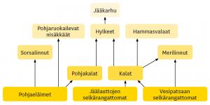 Kuva 2. Funktionaalinen ravintoverkko Karanmeren rannikkoalueelle. Grafiikka Eemeli Nieminen.