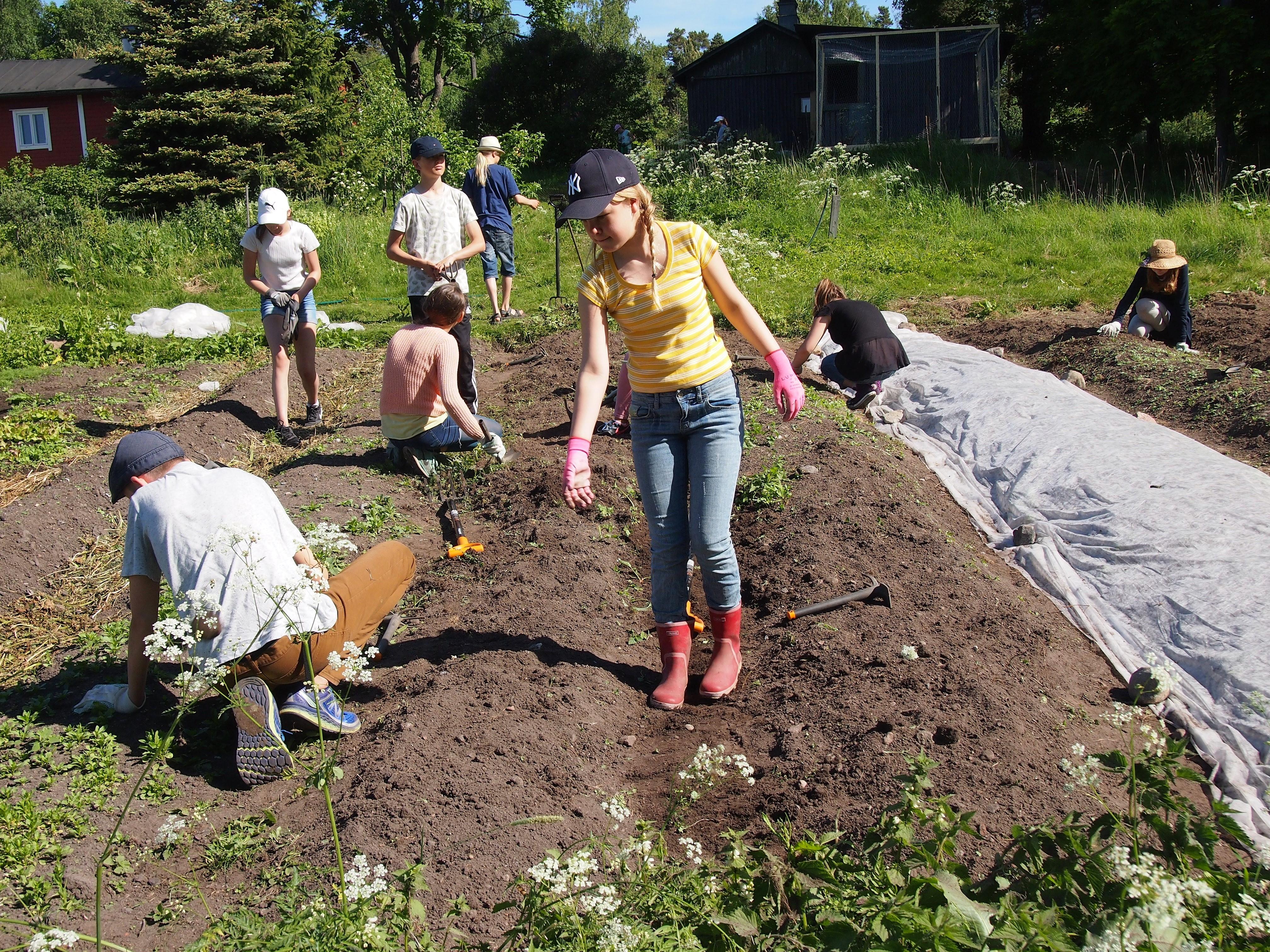Koulun puutarhassa voidaan kokeilla ja konkretisoida monia kestävän ruoantuotannon perustoimia käytännössä. Kuva Pinja Sipari.