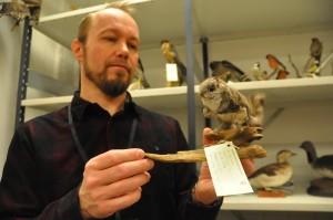 Tomi Kumpulaisen esittelemä liito-orava on rauhoitettu laji. Laki velvoittaa toimittamaan kuolleena tavatut rauhoitetut eläimet luonnontieteelliseen museoon tai tutkimuslaitokseen.