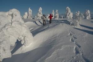 Kuva 5: Hiihtolomalla tykkyjen keskellä hiihtely tai lumikenkäily on elämys. Kylmä viima käy luihin ja ytimiin, mutta maisemat ovat kauniit Luostolla.