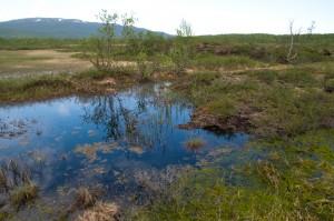 Enontekiön Iitossa on aivan Kilpisjärven tien varressa hieno palsasuo, jonne johtaa myös pitkospuinen luontopolku opastauluineen. Paikka on pysähtymisen arvoinen myös ohikulkumatkalaisille.